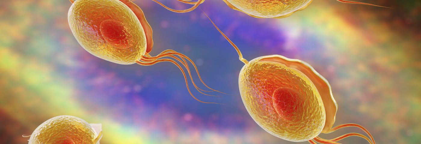 Specific Parasitic Infection May Lead to BPH, According to Study